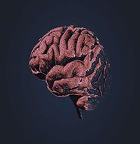 کیفیت هوا بر رشد اولیه مغز تاثیرگذار است.